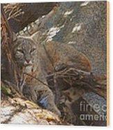 Bobcat Wood Print by DiDi Higginbotham