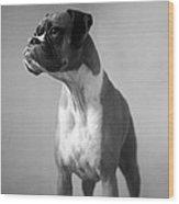 Boxer Dog Wood Print by Stephanie McDowell