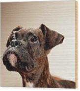 Boxer Puppy Wood Print by Chad Latta