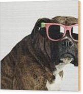 Boxer Wearing Sunglasses Wood Print by Ron Nickel