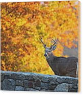 Buck In The Fall 07 Wood Print by Metro DC Photography