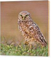 Burrowing Owl Wood Print by TNWA Photography