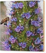 Busy Bee Wood Print by Ruth Edward Anderson
