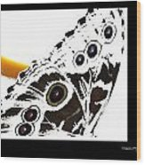 Butterfly Dream Wood Print by Xoanxo Cespon