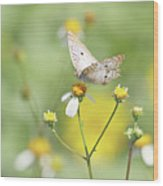 Butterfly On Wildflower Wood Print by Kim Hojnacki
