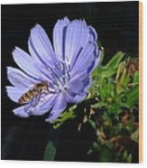Buzzy In Blue Wood Print by Alison Richardson-Douglas
