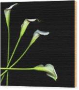 Calla Lily Wood Print by Photograph by Magda Indigo