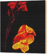 Canna Lilies On Black Wood Print by Mother Nature
