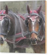 Carriage Horses Pleasure Pair Wood Print by Connie Moses