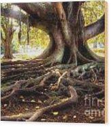 Centenarian Tree Wood Print by Carlos Caetano