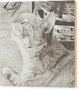 Cepheus Wood Print by Mick Hogan