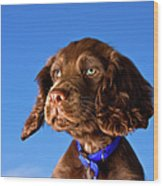 Chocolate Brown Cocker Spaniel Puppy Wood Print by Andrew Davies