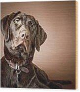 Chocolate Labrador Retriever Portrait Wood Print by David DuChemin