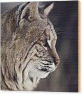Close-up Of A Bobcat Felis Rufus Wood Print by Dr. Maurice G. Hornocker