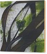 Close-up Of Seaweed In Water Wood Print by Axiom Photographic