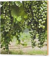 Clusters Of Grapes On The Vine At Fall Wood Print by James Forte