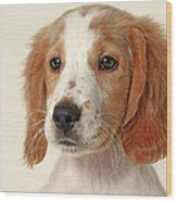 Cocker Spaniel Puppy Wood Print by Retales Botijero