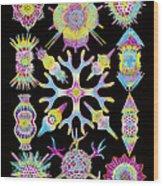 Computer Art Of Radiolarians (from Ernst Haeckel) Wood Print by Mehau Kulyk