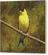 Contemplating Goldfinch Wood Print by J Larry Walker