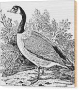 Cravat Goose Wood Print by Granger