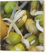 Cross Section Of Some Healthy Sprouts Wood Print by Ashish Agarwal