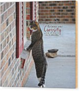 Curiosity Inspirational Cat Photograph Wood Print by Jai Johnson