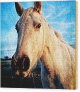 Curious Horse Wood Print by Toni Hopper