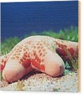 Cushion Star (choriaster Granulatus) Wood Print by Georgette Douwma