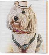 Cute Dog In Halloween Cowboy Costume Wood Print by Elena Elisseeva