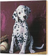 Dalmatian Puppy With Baseball Wood Print by Garry Gay