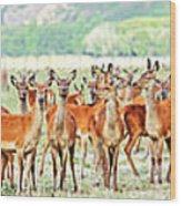 Deers Wood Print by MotHaiBaPhoto Prints