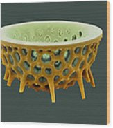 Diatom, Sem Wood Print by David Mccarthy
