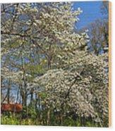 Dogwood Grove Wood Print by Debra and Dave Vanderlaan
