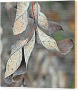 Dry Leaves Wood Print by Lisa Phillips