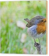 European Robin Wood Print by Photostock-israel