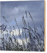 Evening Grass Wood Print by Elena Elisseeva