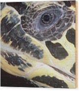 Extreme Close-up Of The Head Wood Print by Beverly Factor