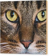 Face Framed Feline Wood Print by Art Dingo