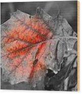 Fall Leaf Wood Print by Rick Rauzi