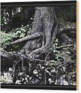 Fantasy Roots Wood Print by Linda Olsen