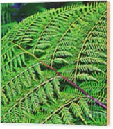 Fern Frond Wood Print by Kaye Menner