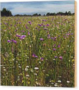 Field Of Thistles Wood Print by Tamyra Ayles