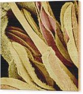Flower Reproductive Parts, Sem Wood Print by Susumu Nishinaga