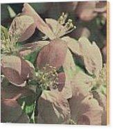 Flowering Crabapple Muted Wood Print by Mark J Seefeldt