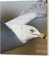 Flying Seagull Closeup Wood Print by Wingsdomain Art and Photography