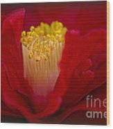 Folds Of Red Wood Print by Jacky Parker