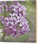 Fragrant Purple Lilac Wood Print by Cheryl Davis