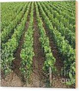 French Vineyard Wood Print by Bernard Jaubert