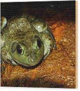 Frog Love Wood Print by LeeAnn McLaneGoetz McLaneGoetzStudioLLCcom