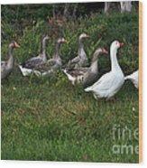 Gaggle Of Geese Wood Print by Kaye Menner